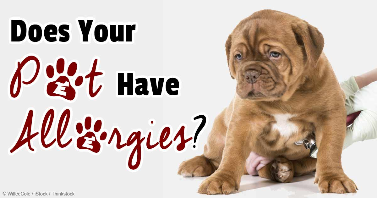 Food Recommendations For Dogs With Allergies