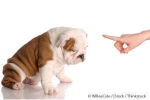 Entrenamiento de Cachorros