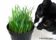 Your Cat's Brain Under the Influence of Catnip: What's Going On?