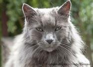 Las 3 Etapas de la Vejez de los Gatos y lo que Sucede en Cada una De Ellas