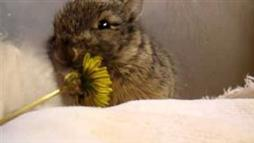 Pet Bunny Eating a Flower