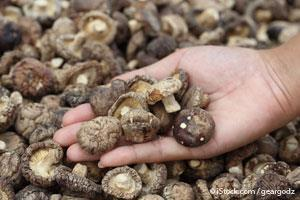 Mushroom Extract Might Eradicate HPV Infection