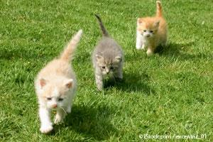 Walking Kittens