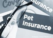 Pet Health Insurance: Don't Be Caught Without These 5 Categories of Care