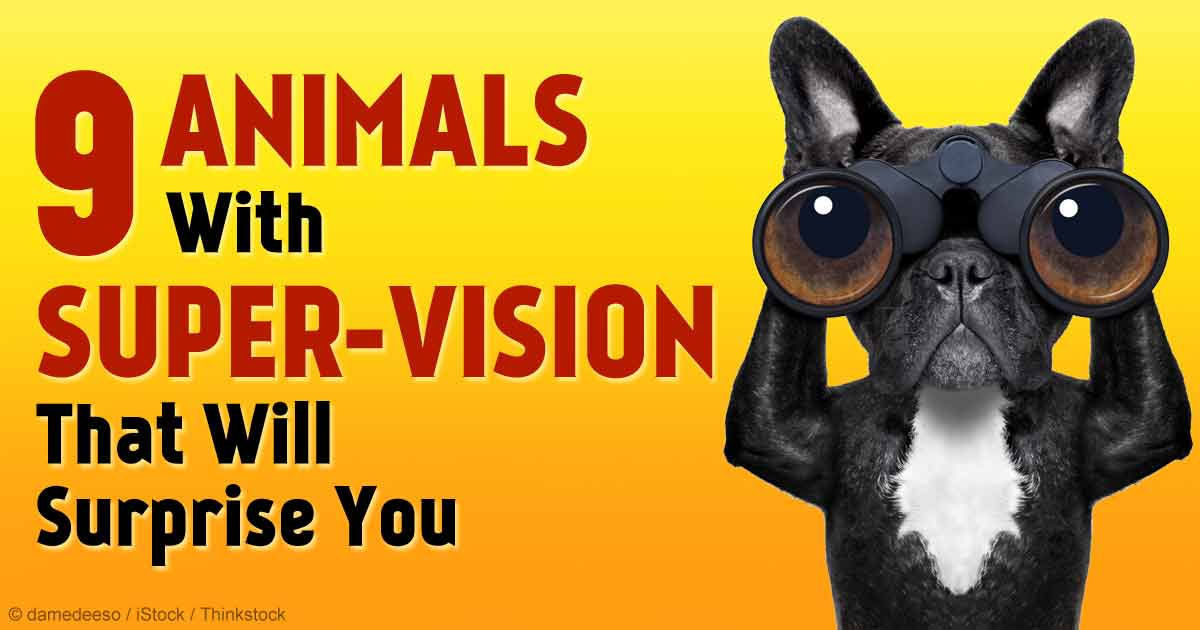 Cat With The Best Eyesight