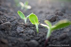 Agricultura Regenerativa: Sembrando Salud, Sustentabilidad y Estabilidad Climática