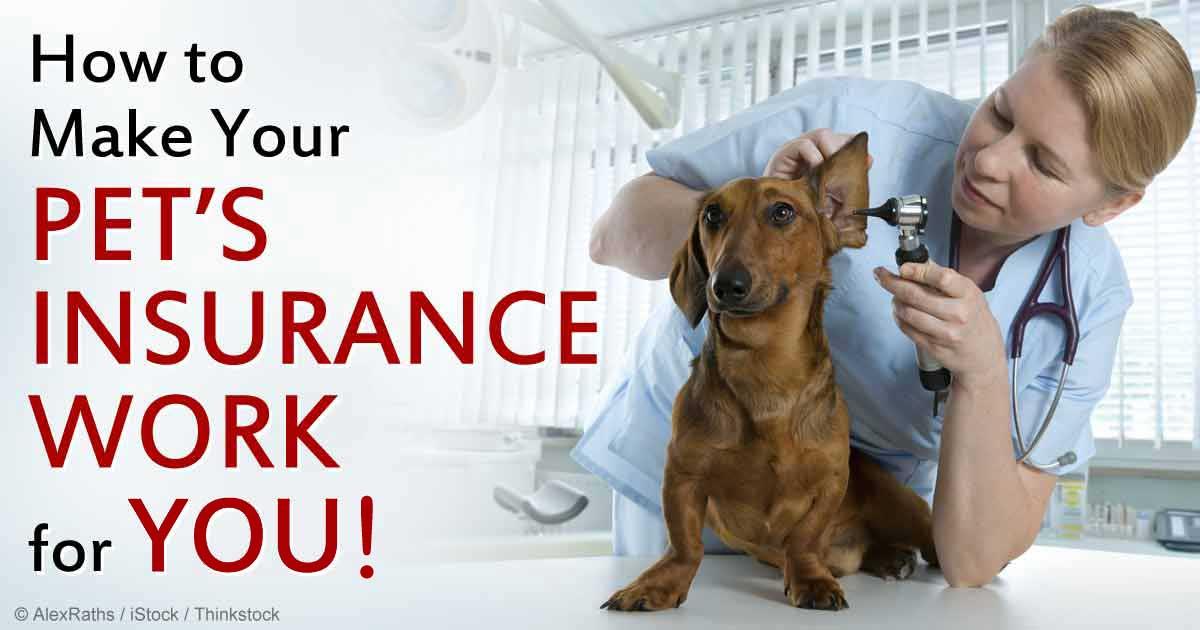 Cat pet health insurance