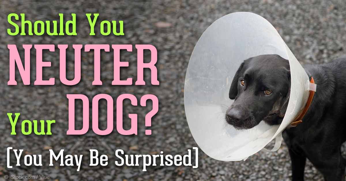 When Should You Neuter A Large Breed Dog