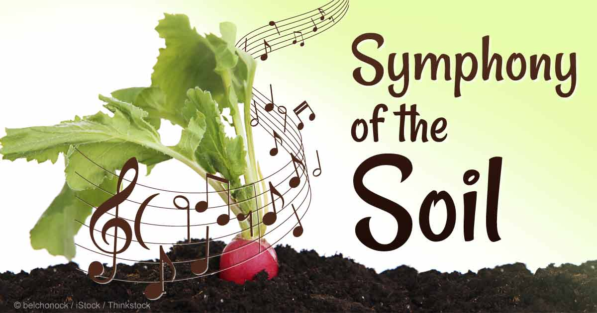 Symphony of the soil extols the importance and mystery for Soil sentence