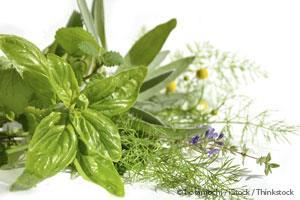 Health Benefits of Medicinal Plants