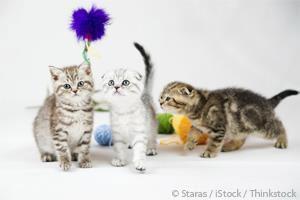 Comportamiento de Gatos