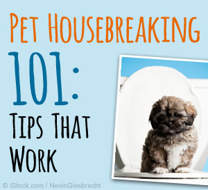 Pet Housebreaking Tips