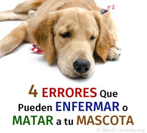 Errores Matar tu Mascotas