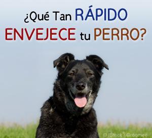 Tan Rapido Envejece tu Perro
