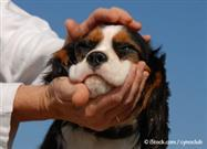 Petting: What Your Dog Craves Most from You