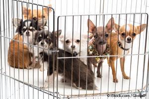 Mascota en Adopción