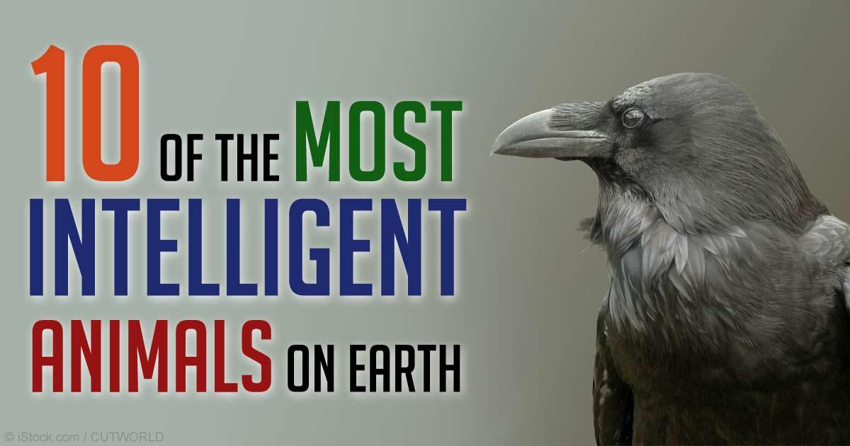 Top 10 Most Intelligent Animals