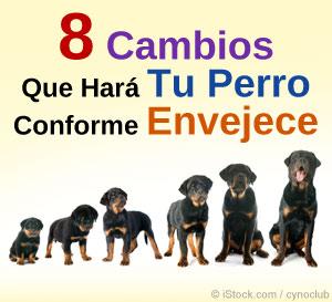 8 cambios que hara tu perro conforme envejece