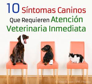 sintomas caninos que requieren atencion veterinaria inmediata
