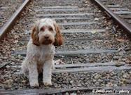 La Mitad de Todos los Perros Perdidos Fueron Encontrados Cuando sus Dueños Hicieron Esto…
