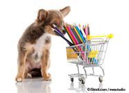 Dangerous School Supplies That Can Attract Your Pet Like a Moth to a Flame