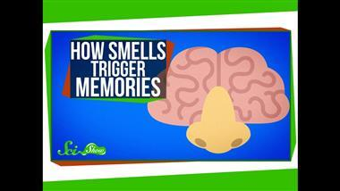 Why Smells Can Trigger Strong Memories