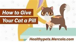 "3 Ways to Give Your Cat a Pill Without Being ""Eaten Alive"""
