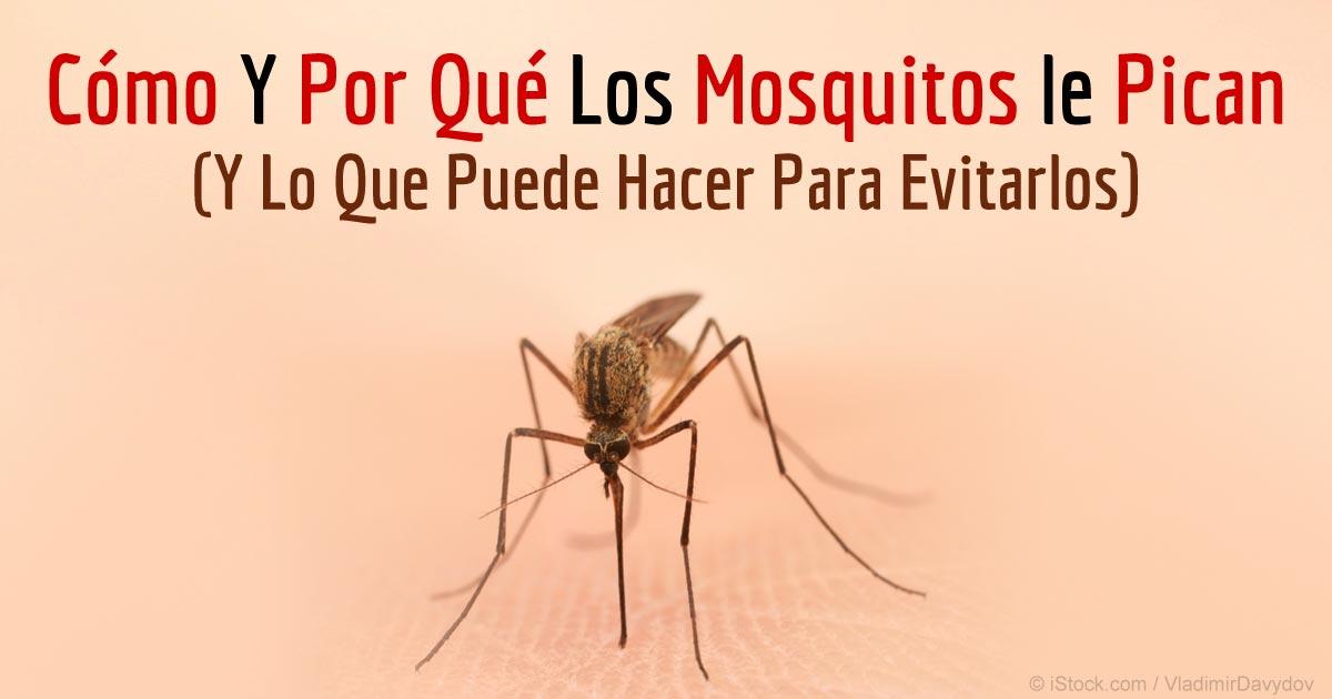 Informaci n sobre mosquitos c mo y porqu pican los mosquitos for Como eliminar los mosquitos del jardin