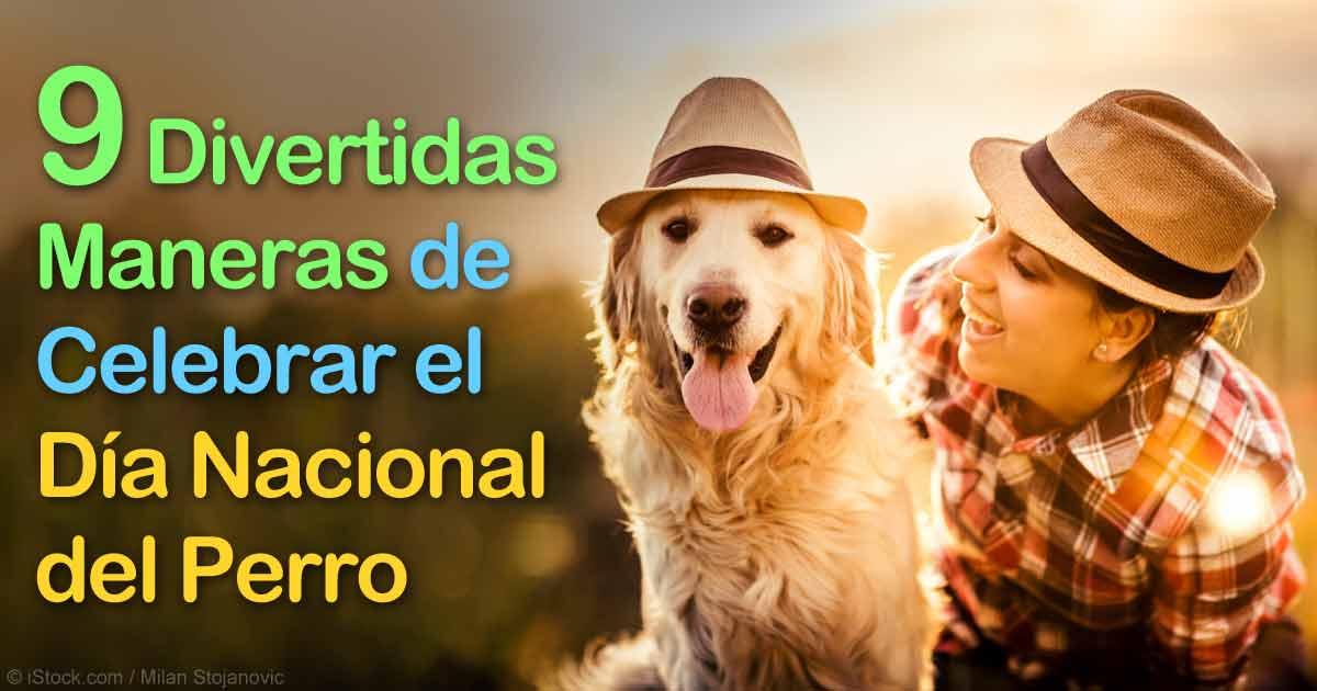 9 Simples Maneras de Celebrar el Día Nacional del Perro