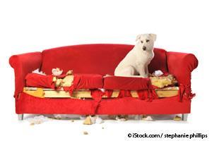 Dog Destroyed Couch