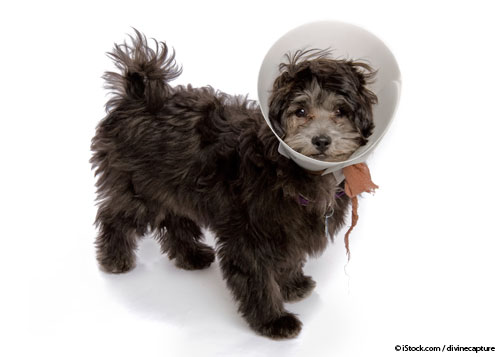 Do You Know the Root Cause of Most Dog Car Sickness?