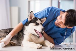 Veterinario Examinando Perro