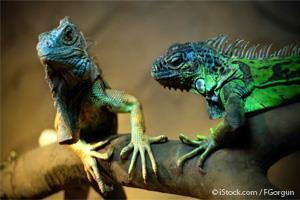 Reptil Mascota