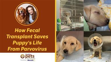 Alternative Treatment Helps Save Puppy from Life Threatening Parvovirus