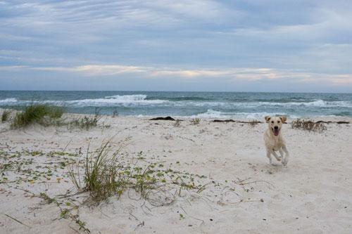 Félix en la Playa
