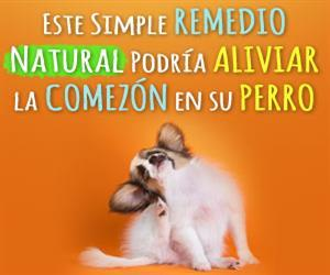 mascotas dermatitis remedio