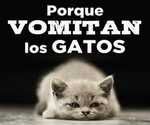 porque vomitan los gatos