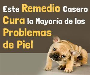 mascotas piel tratamiento de la infeccion