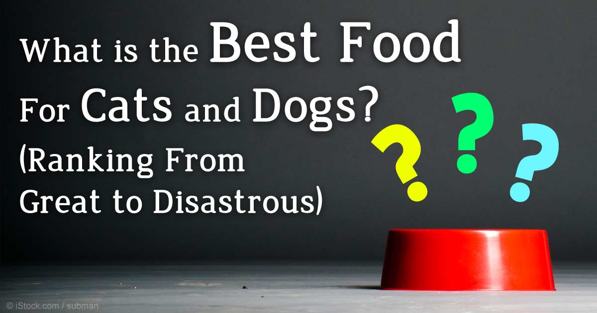Best Dry Food For Dogs With Epi