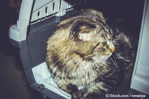 Gato Dentro de un Transportador