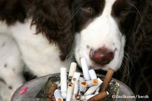 Peligros del Fumar