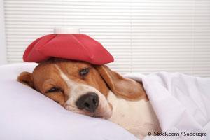 Arsenico Veneno para Mascotas