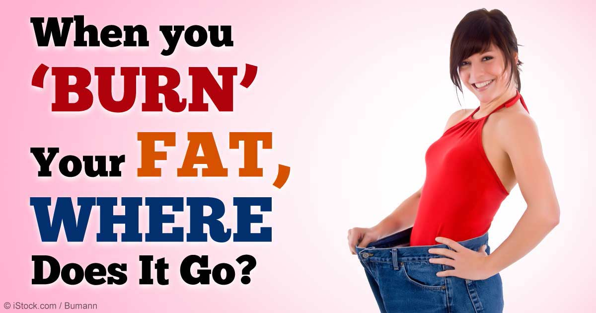 When You Burn Fat, Where Does the Fat Go?