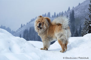 10 Dog Breeds That Make the Best Snow Companions