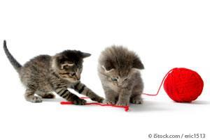 Kittens Play Yarn
