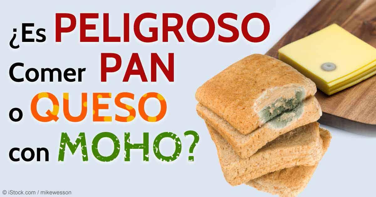 Es seguro comer pan y queso con moho - El moho es un hongo ...