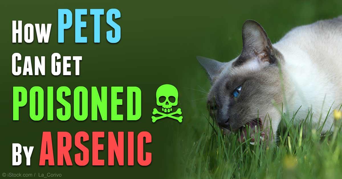 Senior Dog Food >> Diagnosis and Symptoms of Arsenic Poisoning