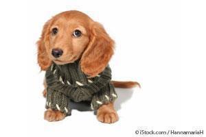 Suéter para Perros