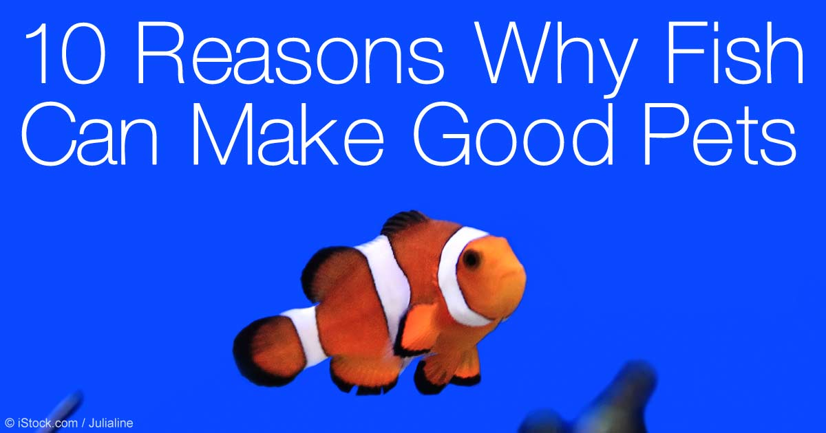 Ten Reasons Why Its Good to Get Fish as Pets