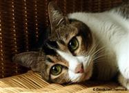 Gato con Dolor